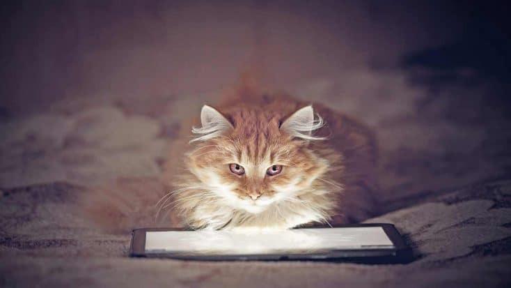 100 außergewöhnliche weibliche Katzennamen und was sie bedeuten