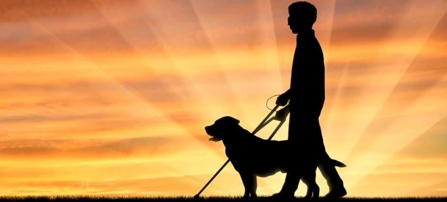 Blindenhund mit Herrchen im Sonnenuntergang