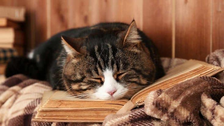 Die 5 größten Fehler bei der Katzenhaltung