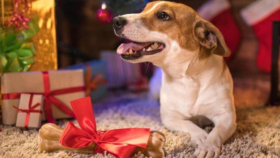 Die besten Geschenke für Hundebesitzer und ihre Lieblinge