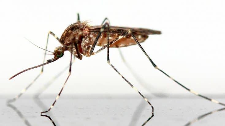 Mücke auf spiegelnder Fläche