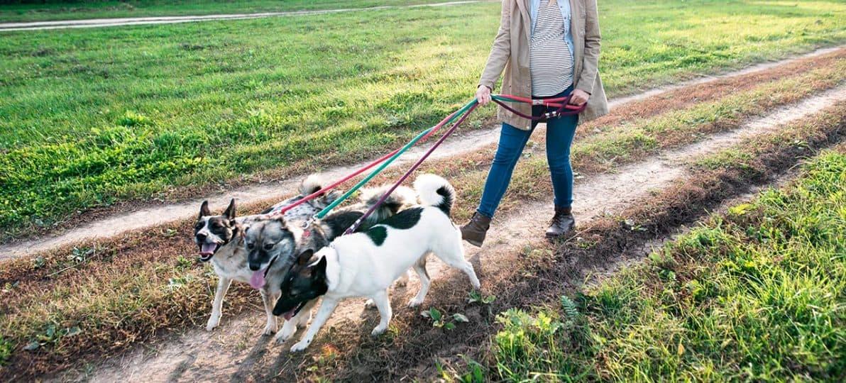 Frau geht mit 3 Hunden über den Feldweg