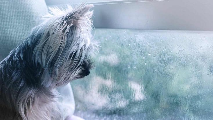 Haben Hunde Angst vor Gewitter
