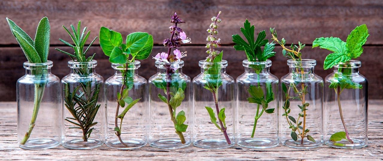 Glasfläschchen mit verschiedenen Heilpflanzen, vor hölzernen Hintergrund