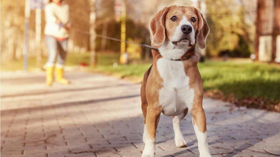 Impulskontrolle bei Hunden: Einflussfaktoren und Trainingstipps