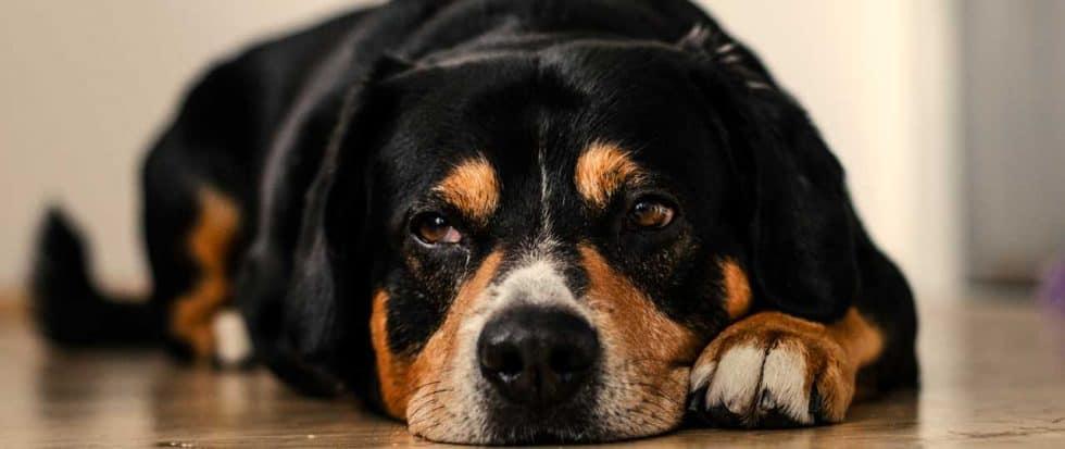 © Dominik QN / Unsplash #collections/212527/dogs