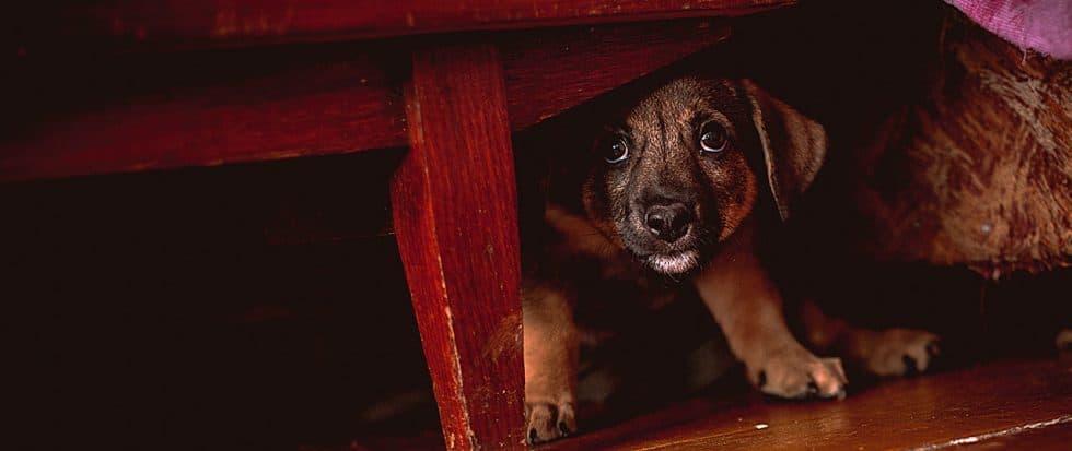 Welpe versteckt sich unter dem Schrank