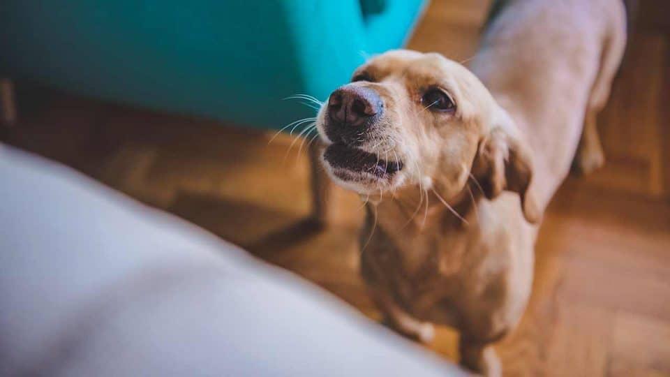 Stress beim Hund: Ursachen, Folgen und Gegenmaßnahmen