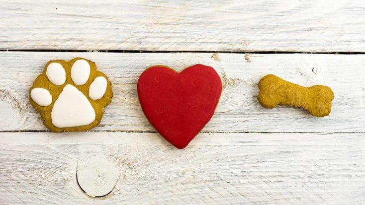 Tierische Weihnachten: So backst Du tolle Hundekekse