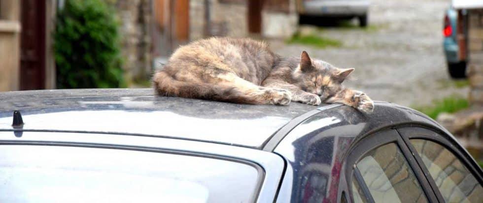 Wenn die Katze mit auf Reisen geht