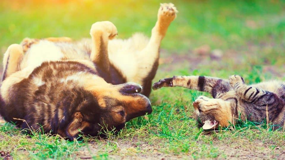 Alterserkrankungen bei Katze und Hund