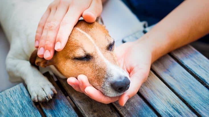 Anämie beim Hund