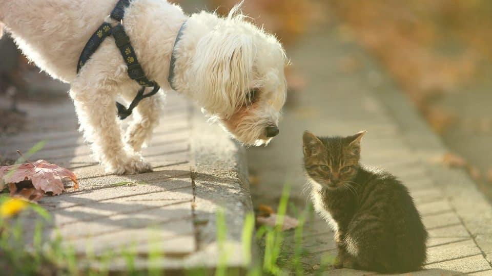 Artgerechte Haltung von Hund und Katze