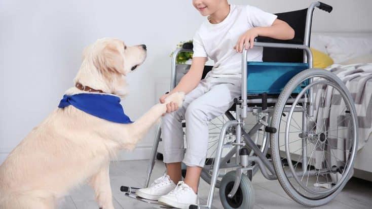 Behindertenbegleithunde