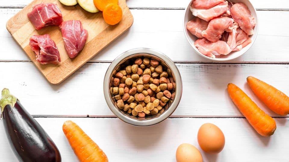 Biofutter für Hunde