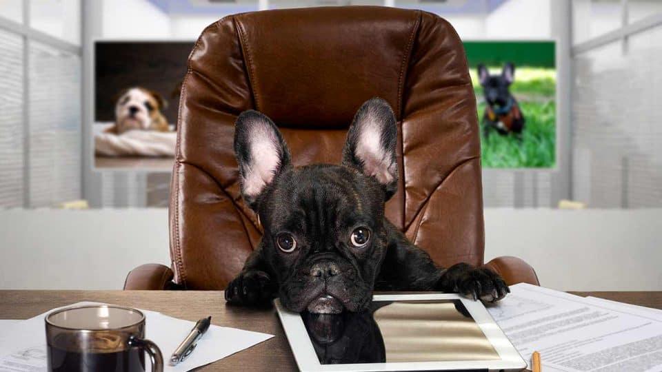 Bürohunde: so klappt es mit dem Vierbeiner am Arbeitsplatz