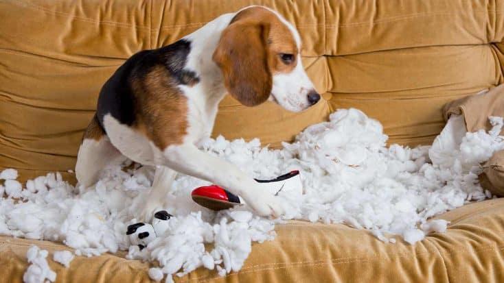 Die 10 größten Fehler, die Hundehalter machen