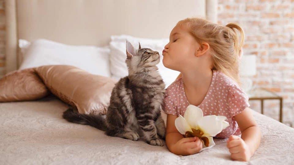 Die Körpersprache von Katzen deuten