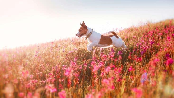 Grasmilben bei Hunden und Katzen
