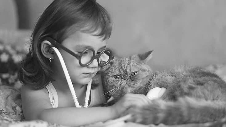 Herzinsuffizienz bei Katzen
