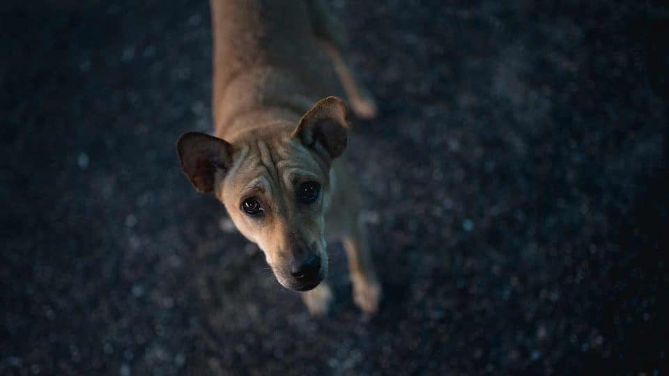 Hund zugelaufen - was tun