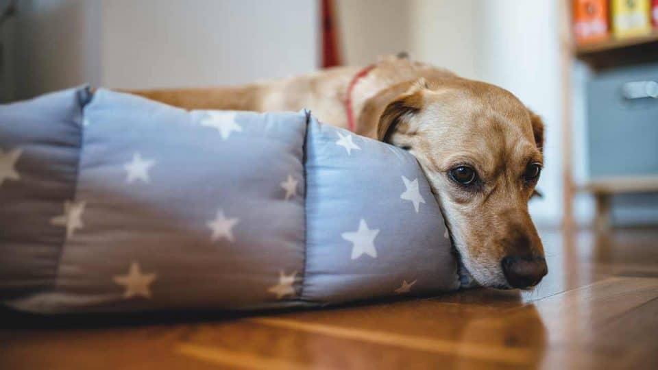 Hundebett selber machen