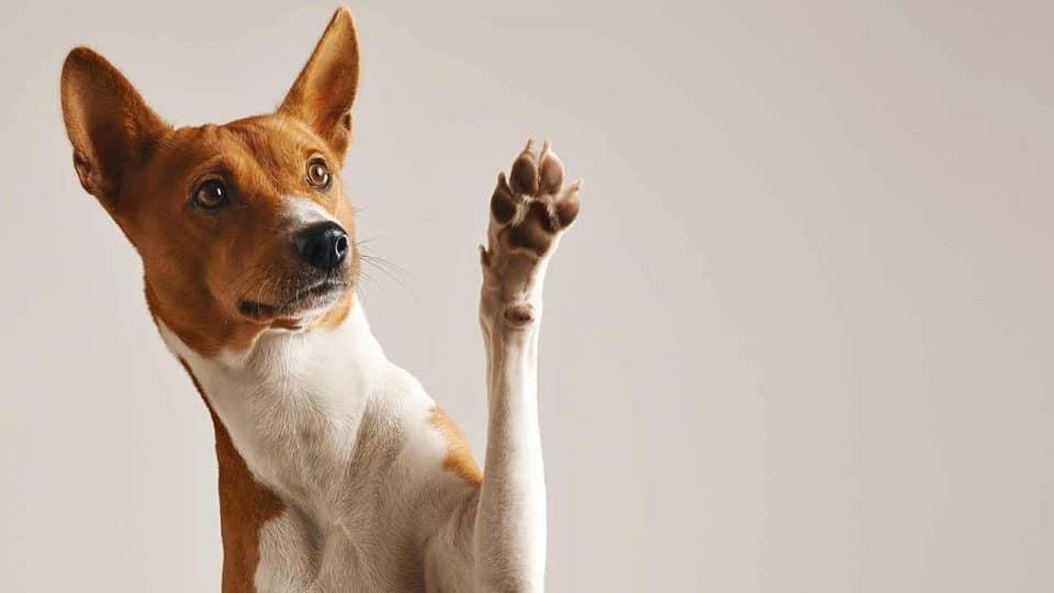 Hundetrick Abklatschen