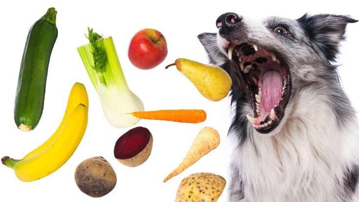 Ist veganes Essen für Hunde gut?