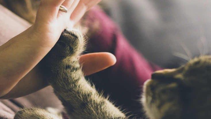 Krallen schneiden bei Katzen