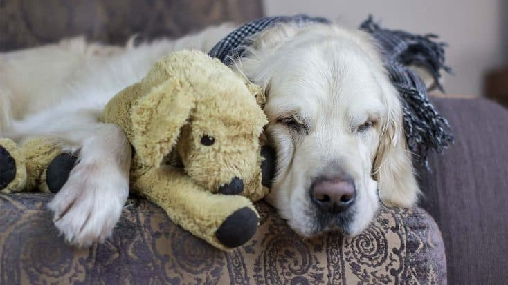 Morbus Addison beim Hund: