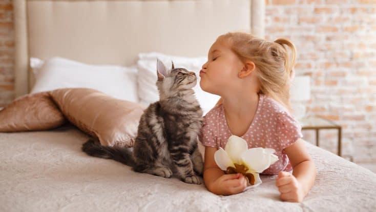 Mundgeruch bei Katzen: Ursachen und Gegenmaßnahmen