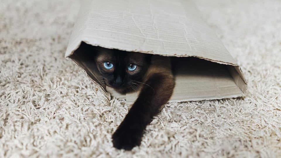 Nervöse und ängstliche Katzen beruhigen
