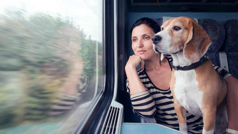Mit Hund Zug fahren