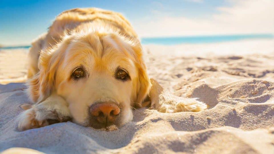 Sonnenbrand bei Hunden