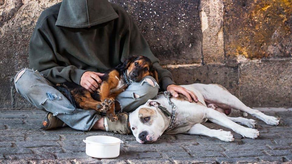 Wie Tiertafeln bedürftigen Haustieren und ihren Haltern helfen