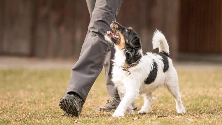 Tricks für Hunde